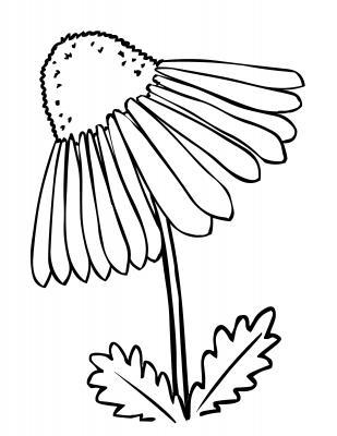 Coneflower coloring #19, Download drawings