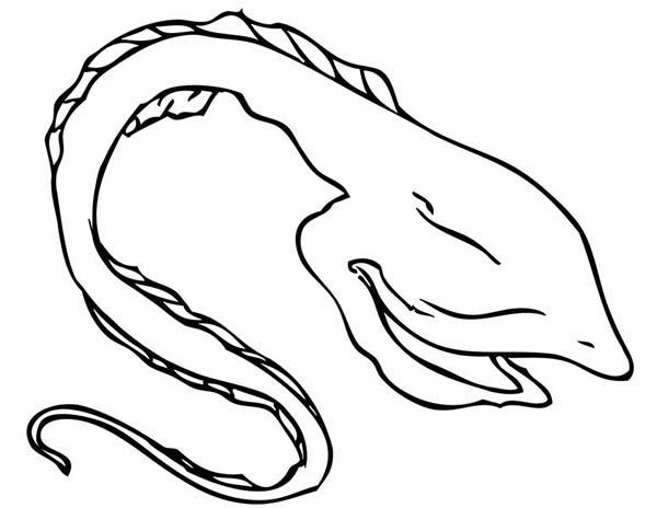 Eel coloring #6, Download drawings