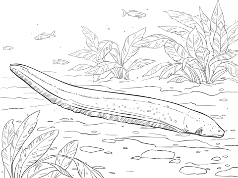 Eel coloring #5, Download drawings