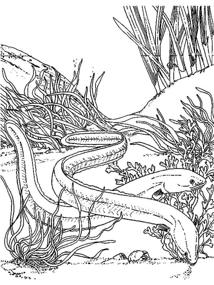 Eels coloring #8, Download drawings
