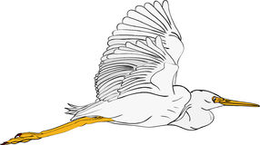 Great Egrets clipart #15, Download drawings