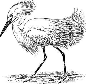 Egret clipart #4, Download drawings