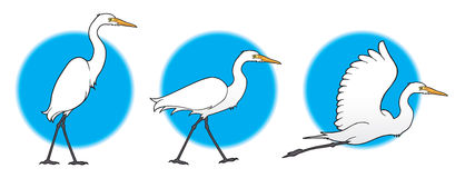 Great Egrets clipart #18, Download drawings