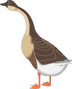 Egyptian Goose clipart #1, Download drawings