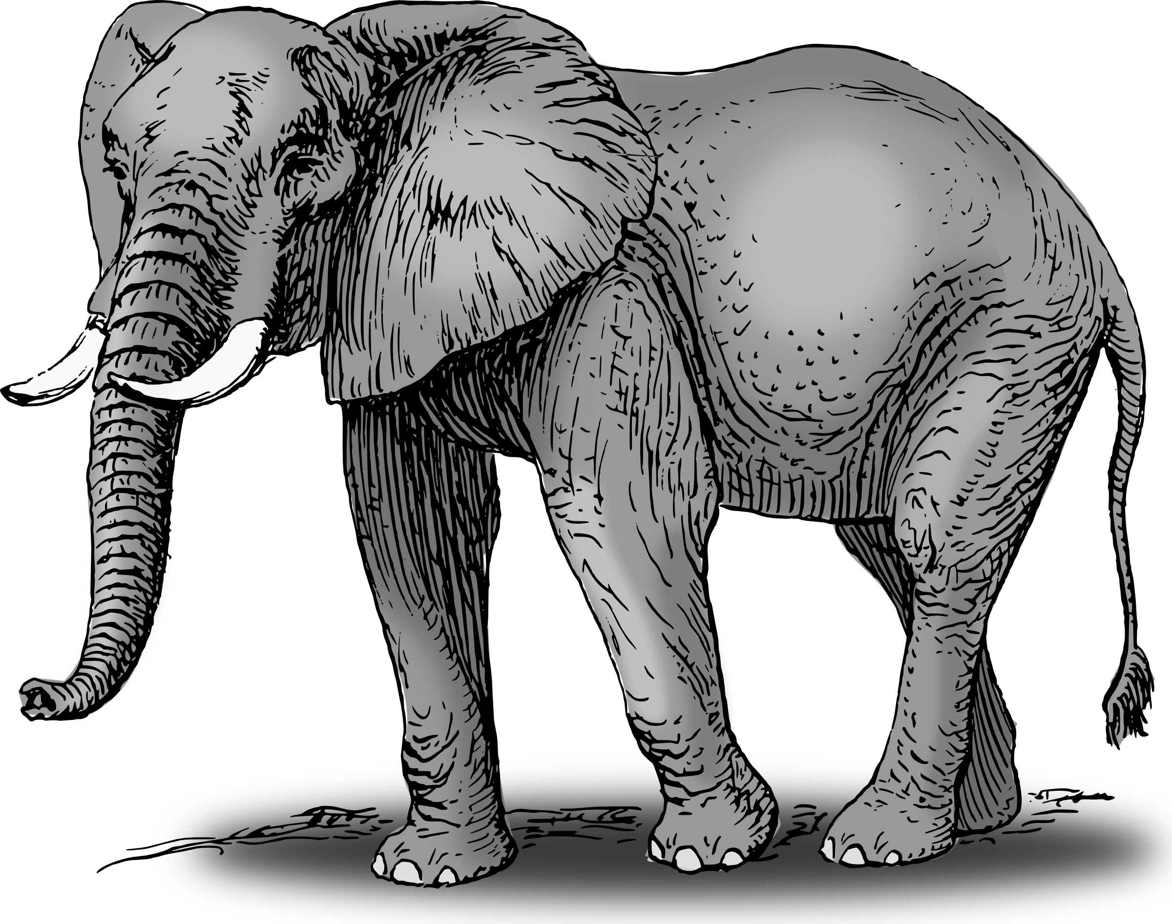 Elephant clipart #3, Download drawings