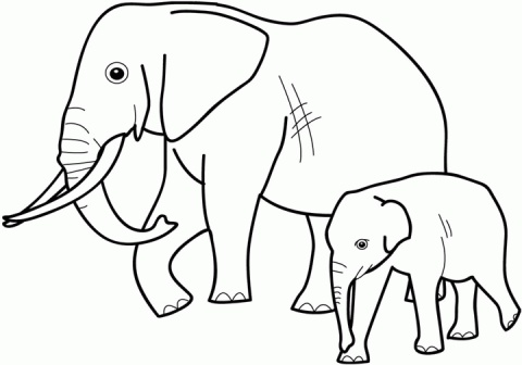 Elephant coloring #20, Download drawings