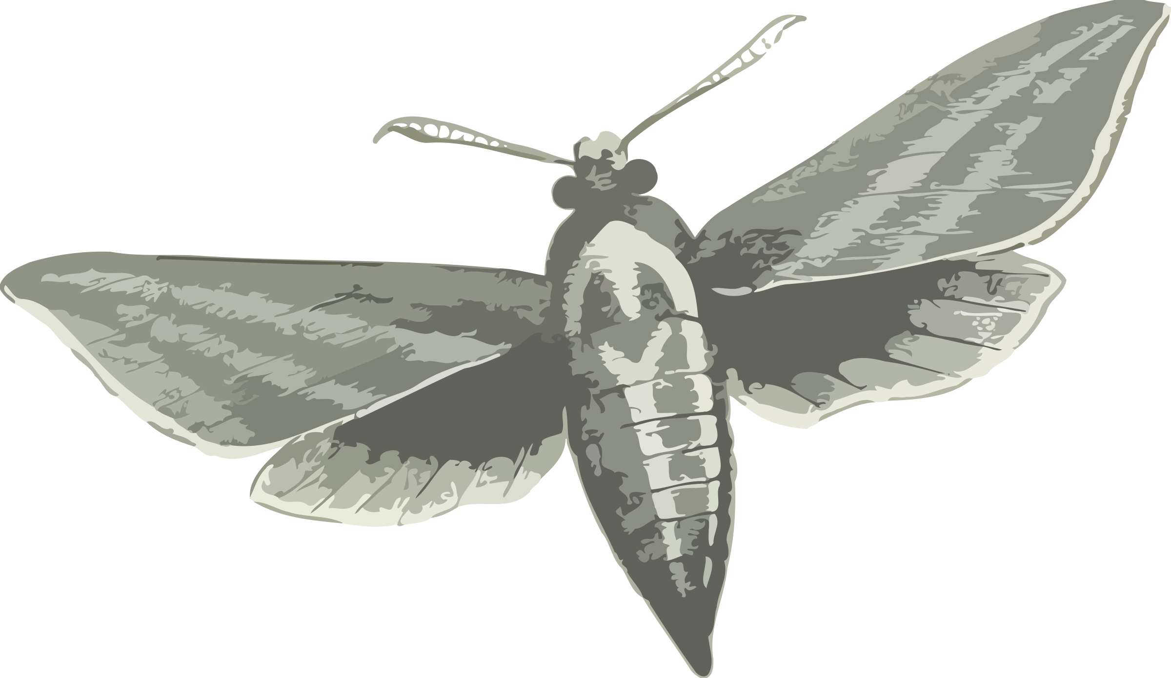 Hawk Moth clipart #5, Download drawings