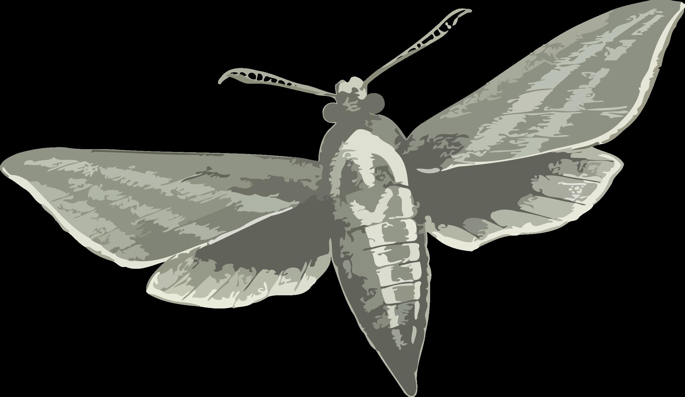 Hawk Moth clipart #16, Download drawings