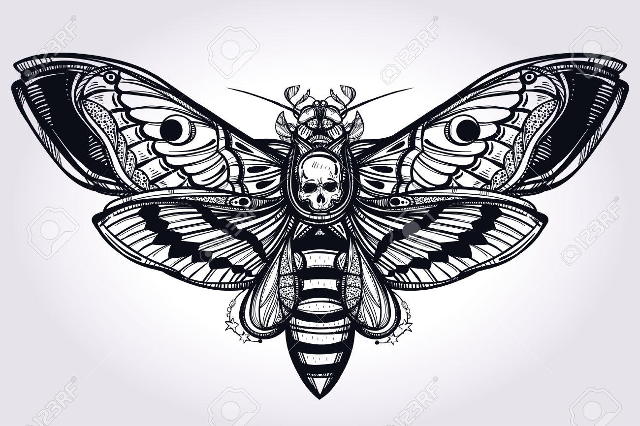 Hawk Moth clipart #4, Download drawings