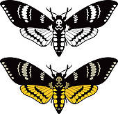Elephant Hawk-moth clipart #3, Download drawings