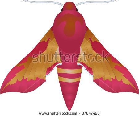 Elephant Hawk-moth clipart #4, Download drawings