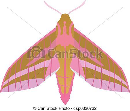 Elephant Hawk-moth clipart #17, Download drawings
