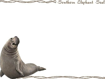 Elephant Seal clipart #1, Download drawings
