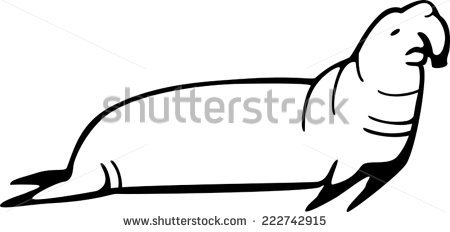 Elephant Seal clipart #19, Download drawings