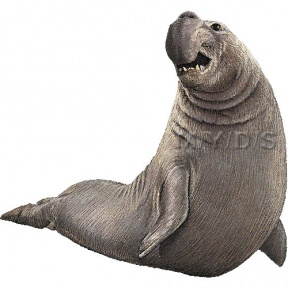 Elephant Seal clipart #14, Download drawings