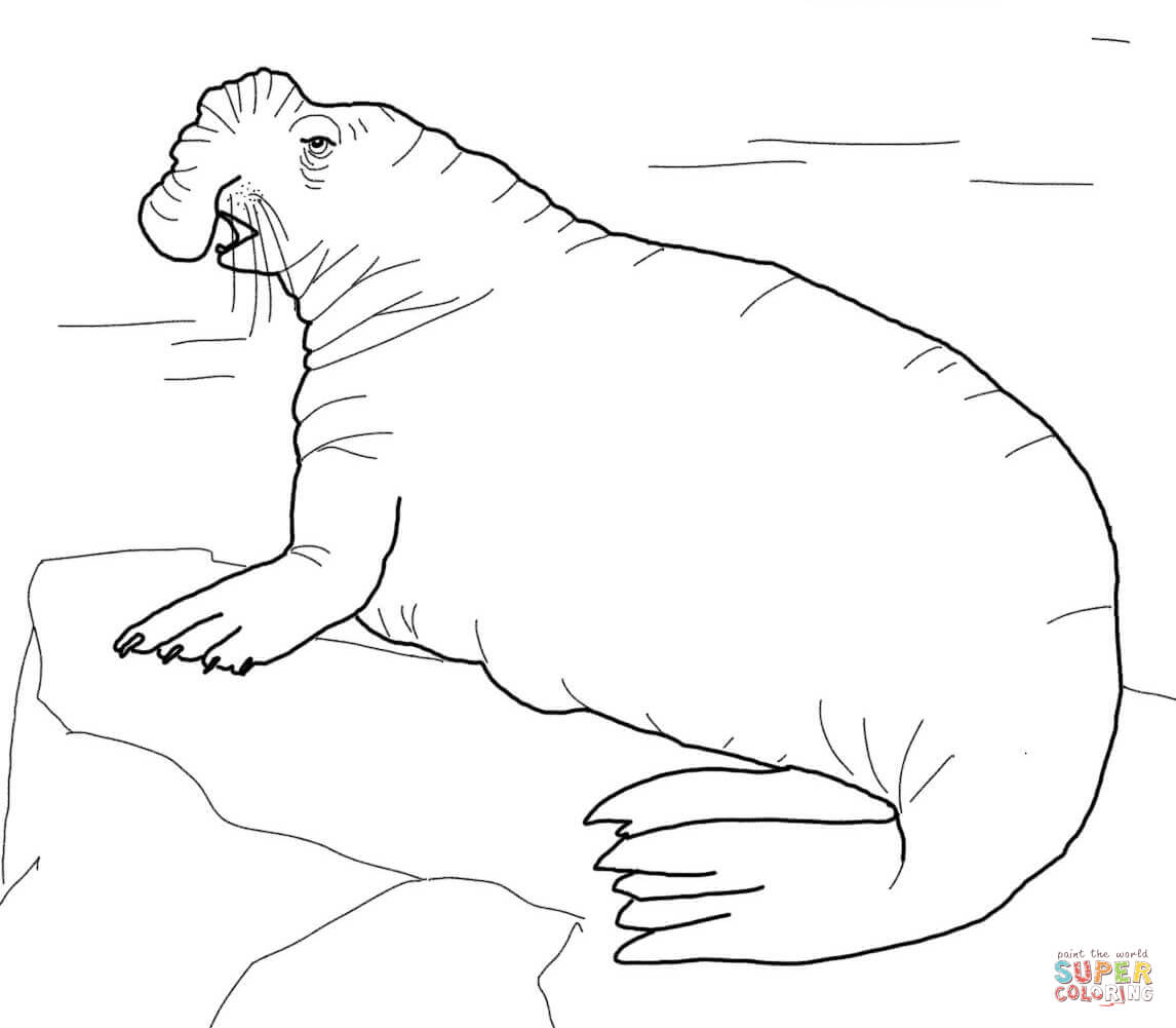 Elephant Seal coloring #17, Download drawings