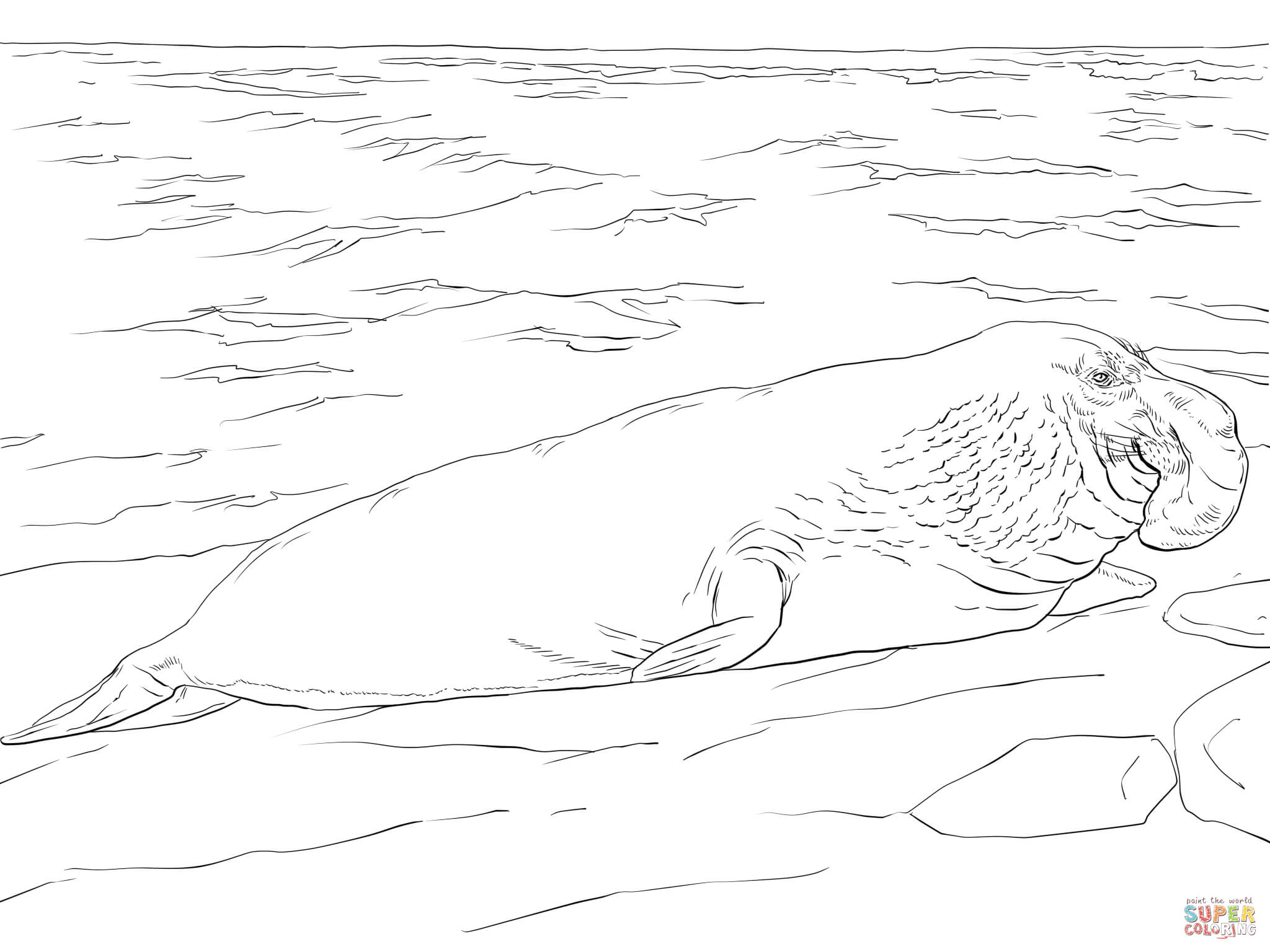 Elephant Seal coloring #7, Download drawings