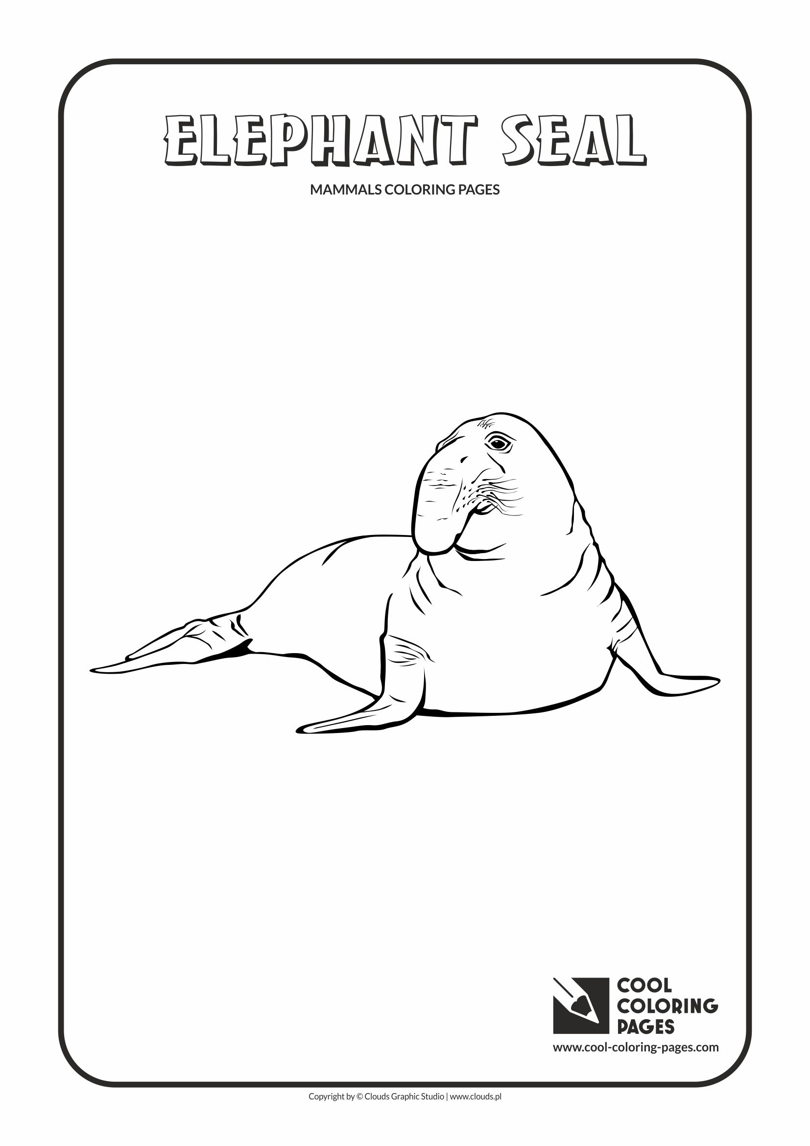 Elephant Seal coloring #8, Download drawings