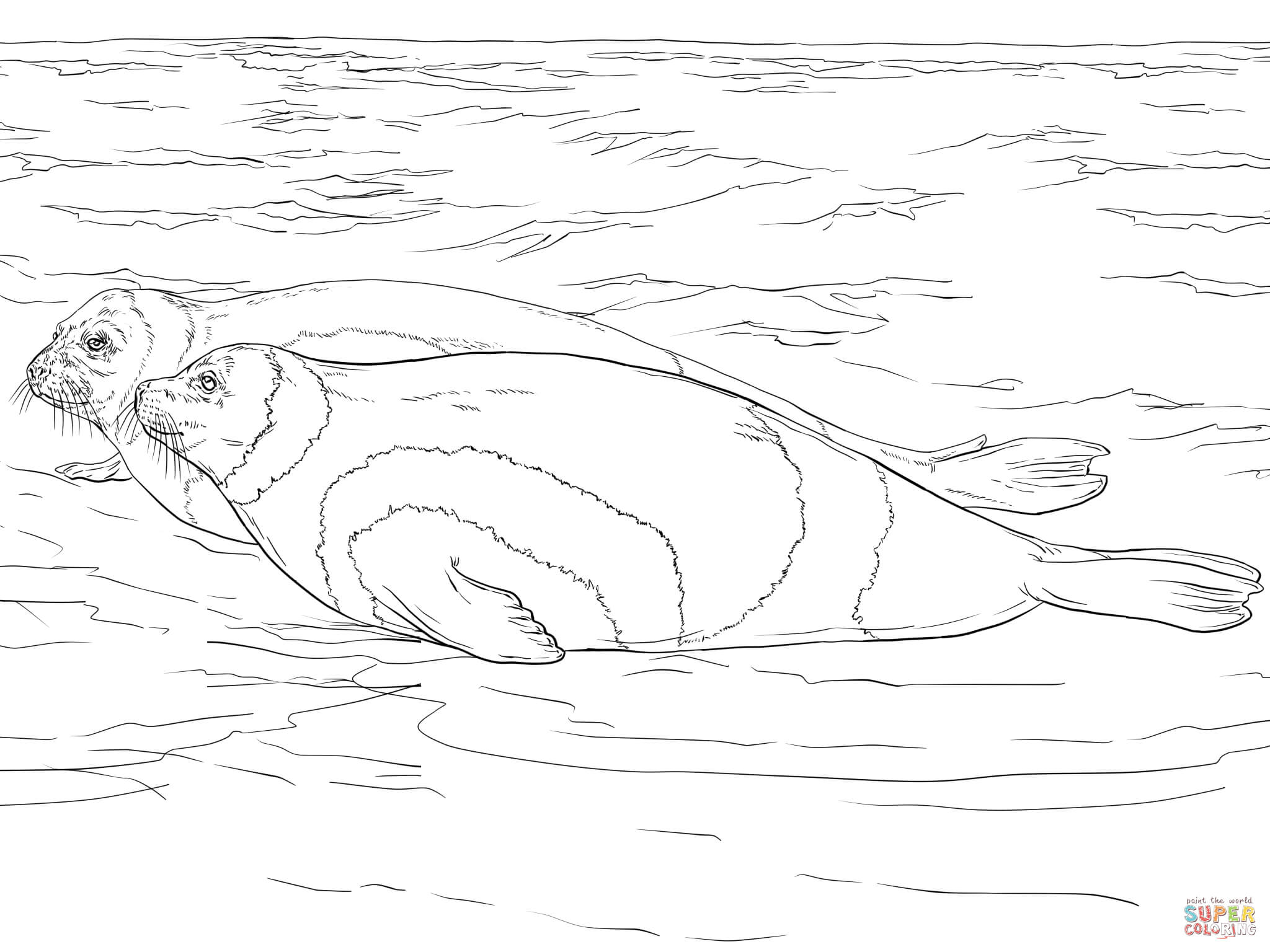 Elephant Seal coloring #6, Download drawings