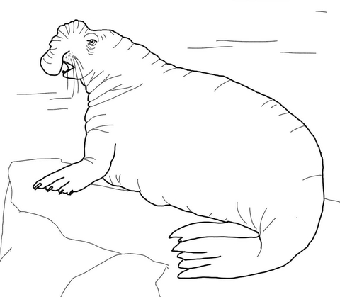 Elephant Seal coloring #13, Download drawings