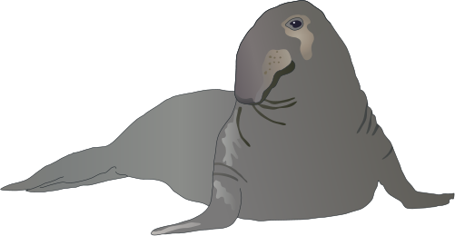 Elephant Seal svg #19, Download drawings