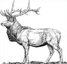 Elk clipart #15, Download drawings