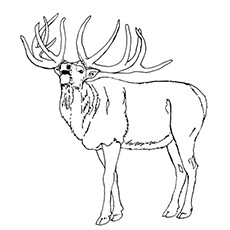 Elk coloring #10, Download drawings