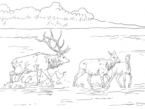 Elk coloring #8, Download drawings