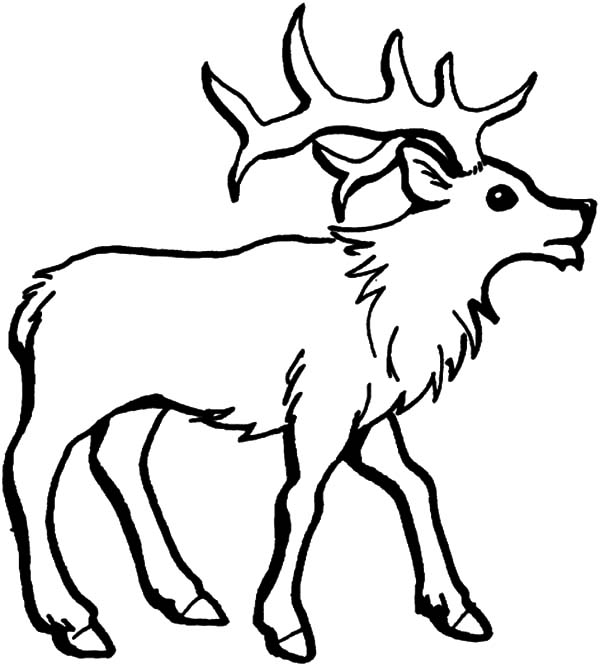 Elk coloring #7, Download drawings