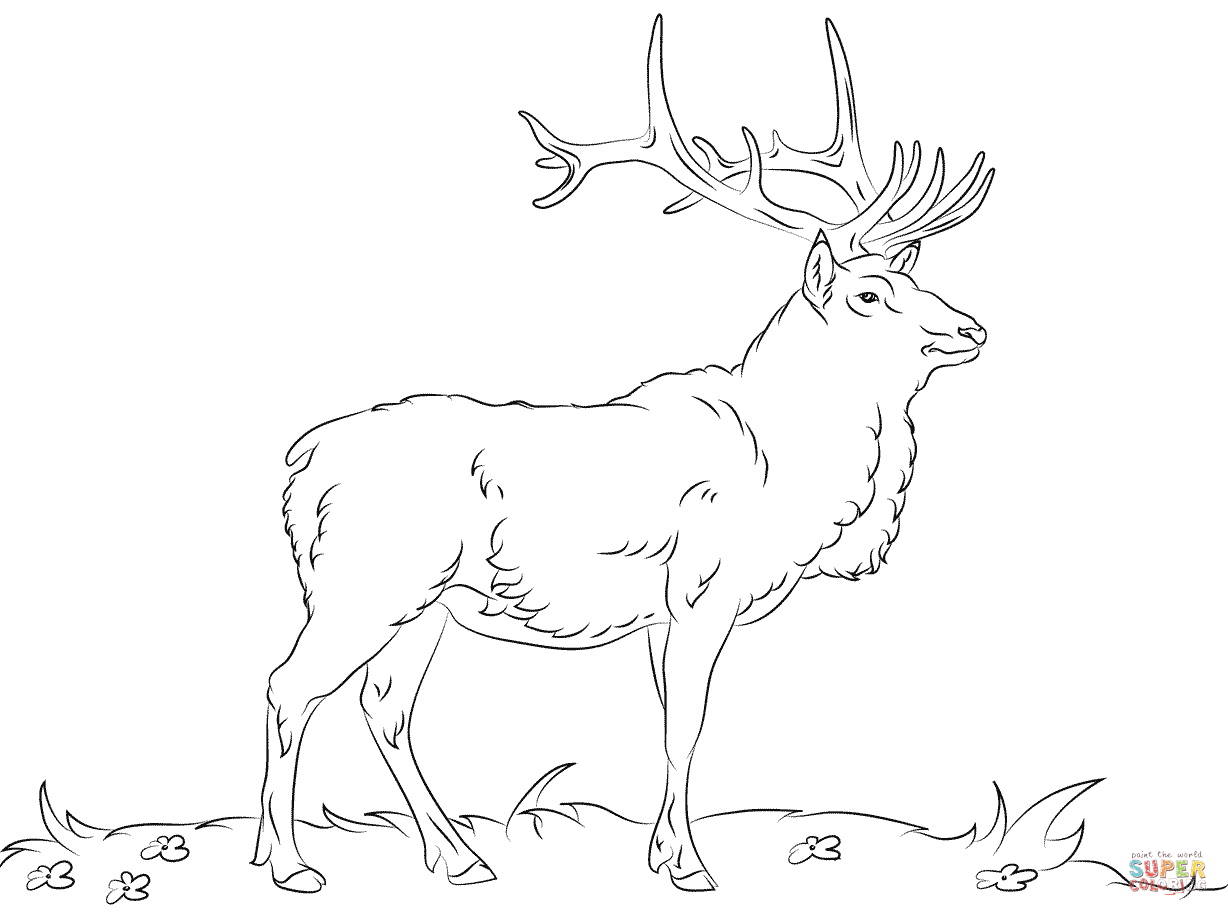 Elk coloring #19, Download drawings