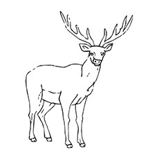 Elk coloring #11, Download drawings