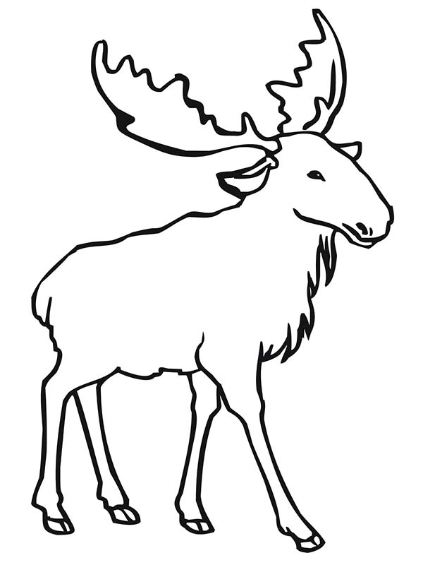 Elk coloring #9, Download drawings