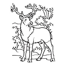 Elk coloring #3, Download drawings