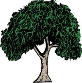 Elm clipart #2, Download drawings
