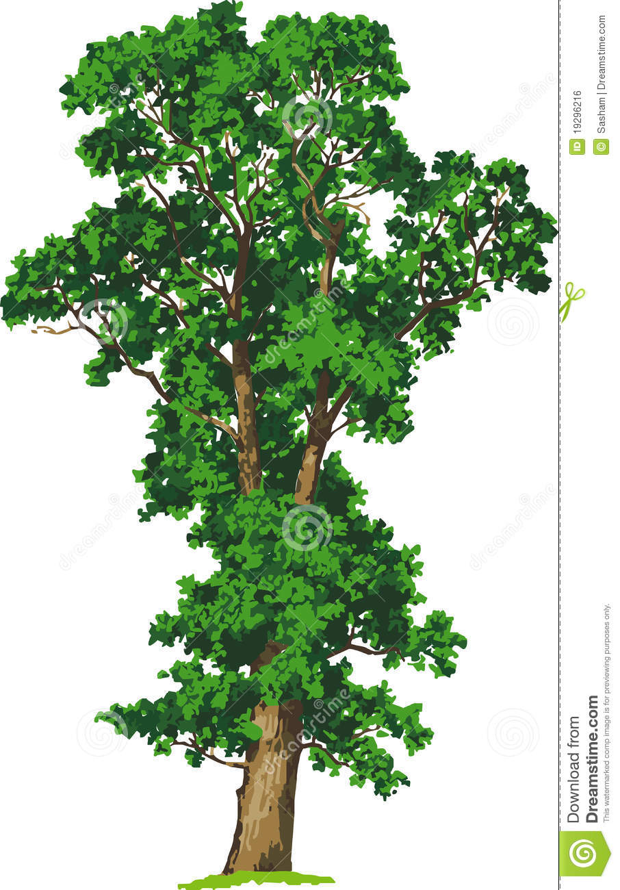 Elm Tree clipart #7, Download drawings