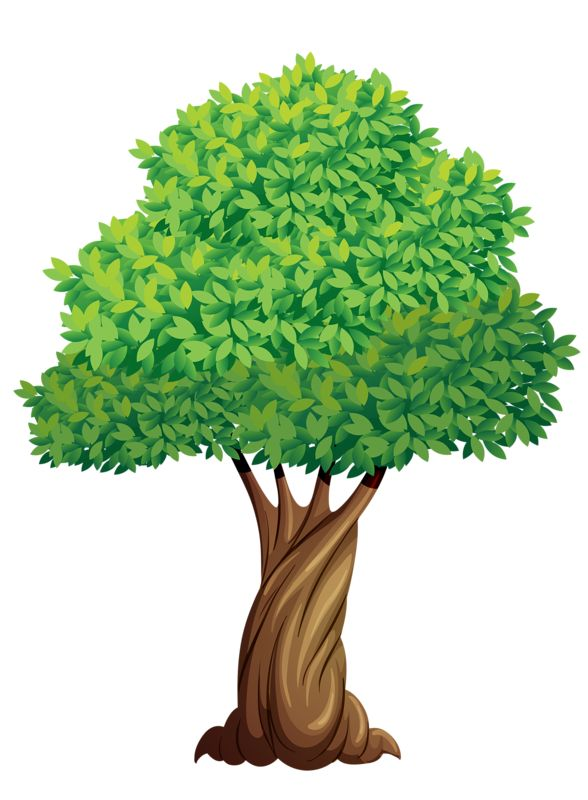 Elm Tree clipart #10, Download drawings