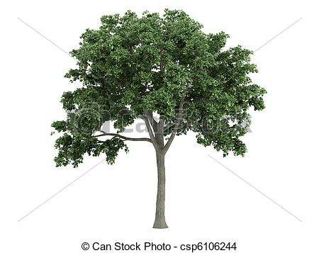 Elm Tree clipart #9, Download drawings