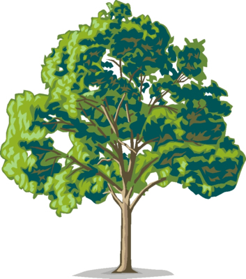 Elm Tree clipart #13, Download drawings