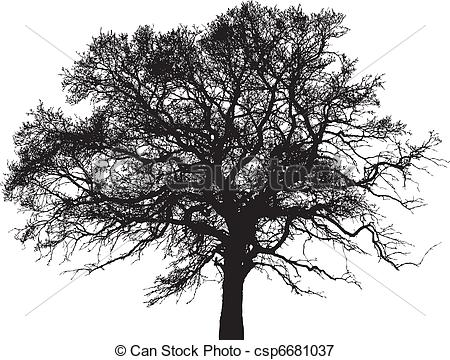 Elm Tree clipart #12, Download drawings