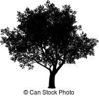 Elm Tree clipart #2, Download drawings
