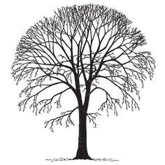 Elm Tree svg #9, Download drawings