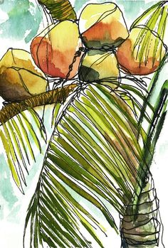 Elma Hallare clipart #3, Download drawings