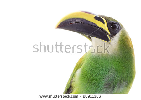 Emerald Toucanet clipart #8, Download drawings