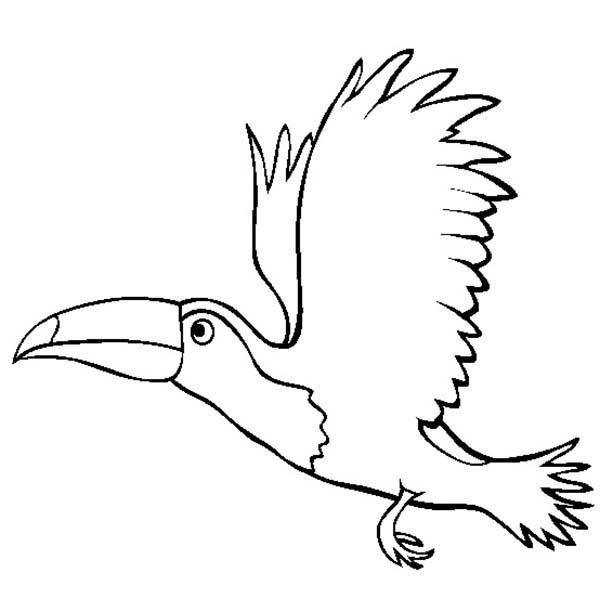 Toucanet coloring #18, Download drawings