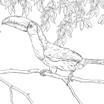 Emerald Toucanet coloring #19, Download drawings