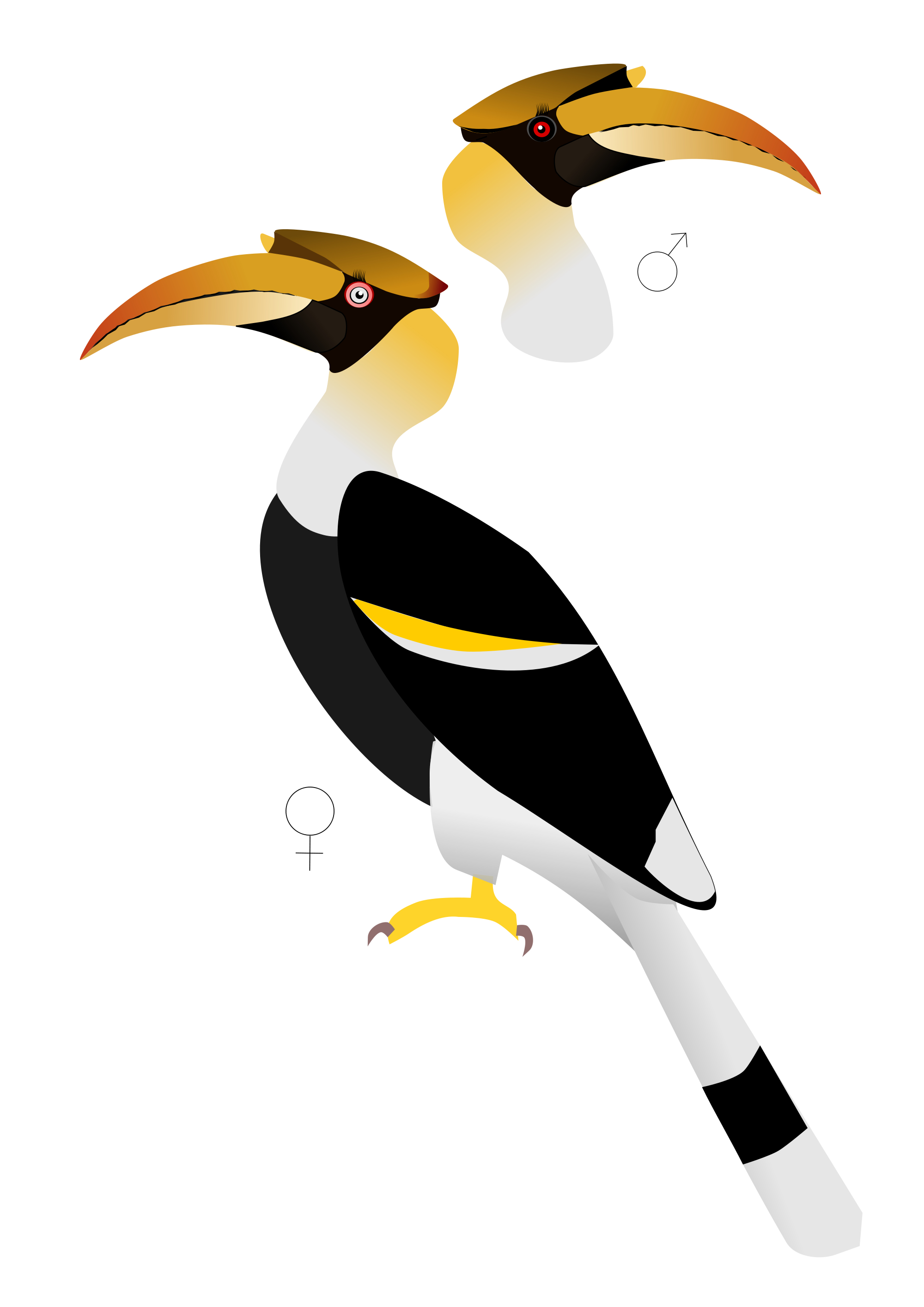 Toucanet svg #20, Download drawings