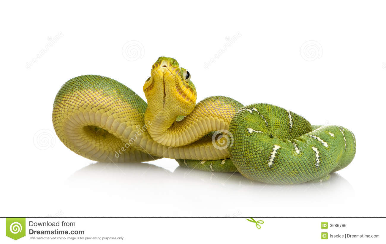 Emerald Tree Boa clipart #15, Download drawings