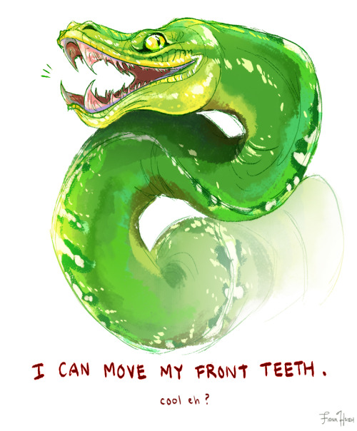 Emerald Tree Boa clipart #3, Download drawings