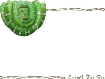 Emerald Tree Boa clipart #16, Download drawings