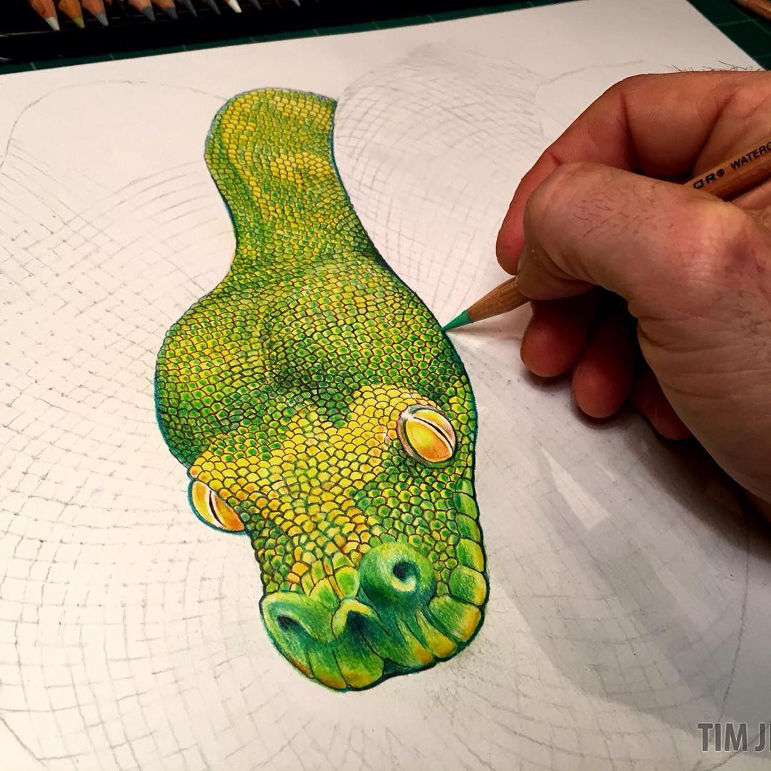 Emerald Tree Boa coloring #1, Download drawings
